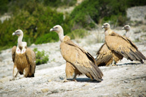 Meeting with vultures